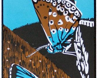 Unframed Linocut Print - Chalk-hill Blues