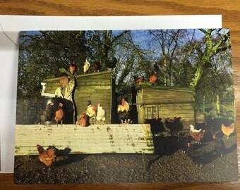 Chicken Photo Card