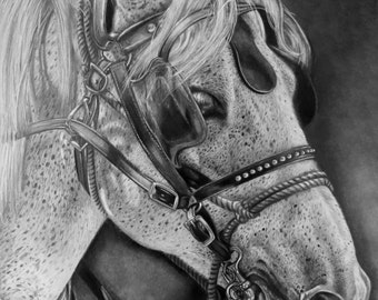 Horse Pencil Drawing Print, Graphite Pencil Horse Print, Black and White Horse Art, Photorealism Horse Drawing, Fine Art Print, Montana Art