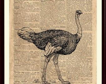Ostrich Print, Ostrich Wall Decor, Ostrich Art Print, Kids Playroom Decor, Nursery Room, Animal Print, Ostrich Poster