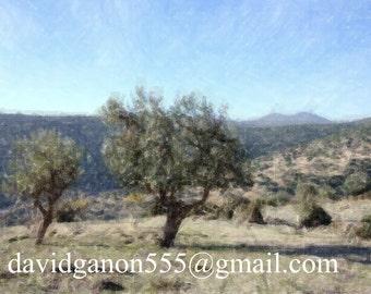 Landscape Photography, landscape Olive trees,Wall decor,Israeli landscape,Enhanced photo,Framed canvas,Oriental authentic art,Nature photo