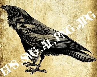 Vector image Raven,Vintage clipart ,Eps,Svg,Ai,Png,Jpg,Instant download,Printable clipart,Digital clipart,Printable B&W Graphic