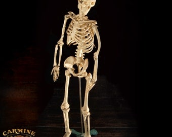 Vintage Medical Small Plastic Human Skeleton