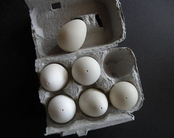 Six empty eggs (guinea fowl) for any egg art including Ukranian Easter eggs (pysanky)