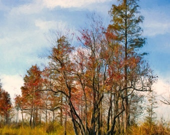 Red Cypress, Blue Skies, Vertical Tree Landscape, Cypress, Fall Colors, Okefenokee Swamp, Large Wall Art, River View, Reflections, Trees