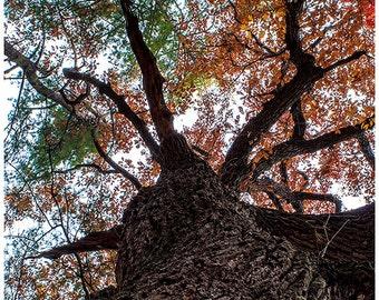 landscape photo,tree photo,tree colors,Tennesse photo,Smoky Mountain Colors,fall colors,trail photo,hiking trail
