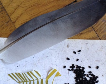 Nigella Seed Blessing Spell Kit