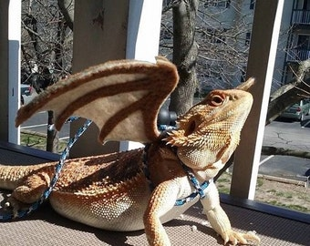Read listing. Bearded Dragon Wings w/ leash (pick your colors! made to order)