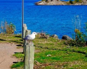 seagull on post, Marquette, MI.