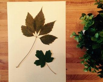 Herbarium 08