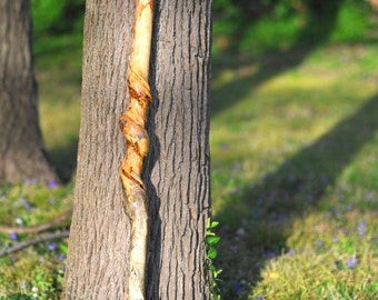 Natural/rare vine twisted HACKBERRY walking stick cane~rustic Log Home decor