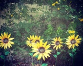 Metal Garden Stakes, Sunflower,  Metal Yard Decorations, Garden Decor, Sunflowers in every shape and color!