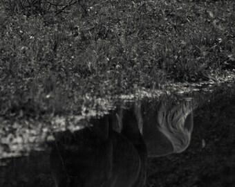 Reflecting Horse