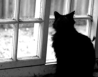 Cat photography, black and white photography, black and white print, animal photography, wall art