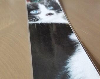 Blue Eyed Kitten - Bookmark