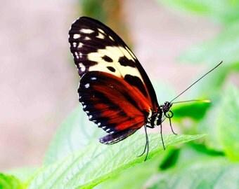 Mothra (Canvas)