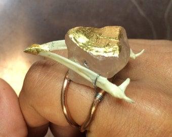 Bird mandible ring