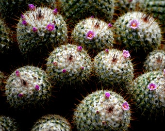Catus with blooms