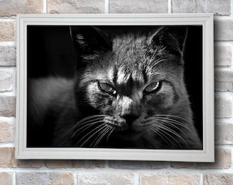Cat,Wall Art Prints, Black and White Prints, INSTANT DOWNLOAD,Digital Printable,Modern Art, Wall Decor