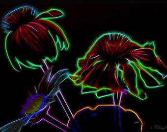 Cone Flowers Glow