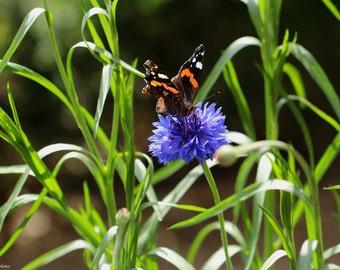 Colorful Nature - Nature Photo - Flower Photography - Butterfly Photo - Macro Photography - Italian Photography - Italian Art