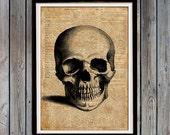 Medical student gift Anatomical art print Human anatomy wall art Human skull print SH31