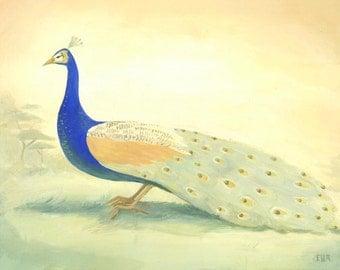 A Peacock Print 14x11