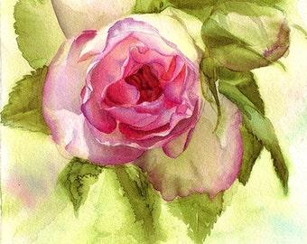 Eden Rose Watercolor Flower Painting - Print