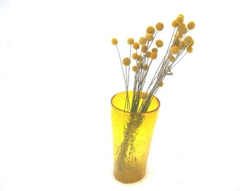 CRASPEDIA DRiED FLOWER Bunches DRUMSTICK or Billy Buttons