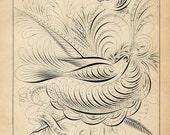 Antique Bird Pen & Ink Print, Antique 1880 Calligraphy, Pen and Ink Flourishing Print, Doves, Nest, Victorian Flourishing Work