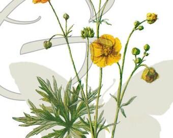 Flower Download Digital Illustration Printable Clip Art Wildflower Botanical Art