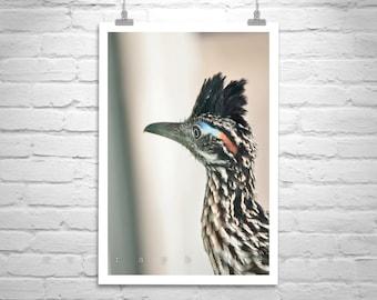 Roadrunner, Wildlife Art, Bird Photography, Sonoran Desert, Bird Art, Bird Print, Desert Birds, Tucson, Arizona Birds, MurrayBolesta