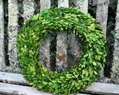 Boxwood Wreath - Preserved Boxwood Wreath - Spring Wreath - Front Door Wreath - Wedding Wreath - Summer Wreath