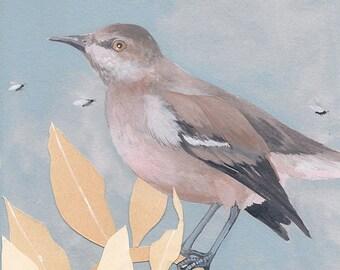 "Northern Mockingbird - bird art print, 6"" x 6""."