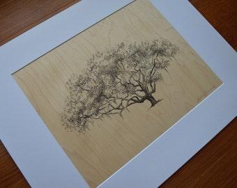 Ribault Club Oak Tree Art Print on Wood Veneer - Pen and Ink Drawing - 11x14