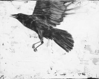 Crow in FLight- metallic print