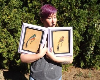 FREE SHIPPING RARE bird pictures with real feathers drawings sketch paintings art vintage (Vault 5)