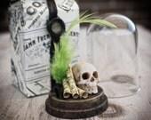 Skull in a Bell Jar Glass  Miniature Vanitas  Still Life Music Sheet