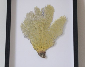 Preserved  Sea Fan -One of a Kind Home Decor