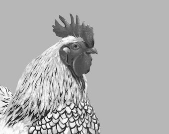 Black and White Rooster Art Print 8 X 10