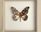 RESERVED FOR NATALIE watercolour painted butterfly entomology artwork