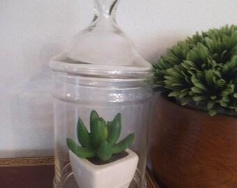 Vintage Apothecary Jar ~ Wedding Candy buffet ~ Terrarium