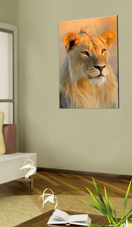 canvas prints wall art of lion lion canvas art photo. Black Bedroom Furniture Sets. Home Design Ideas