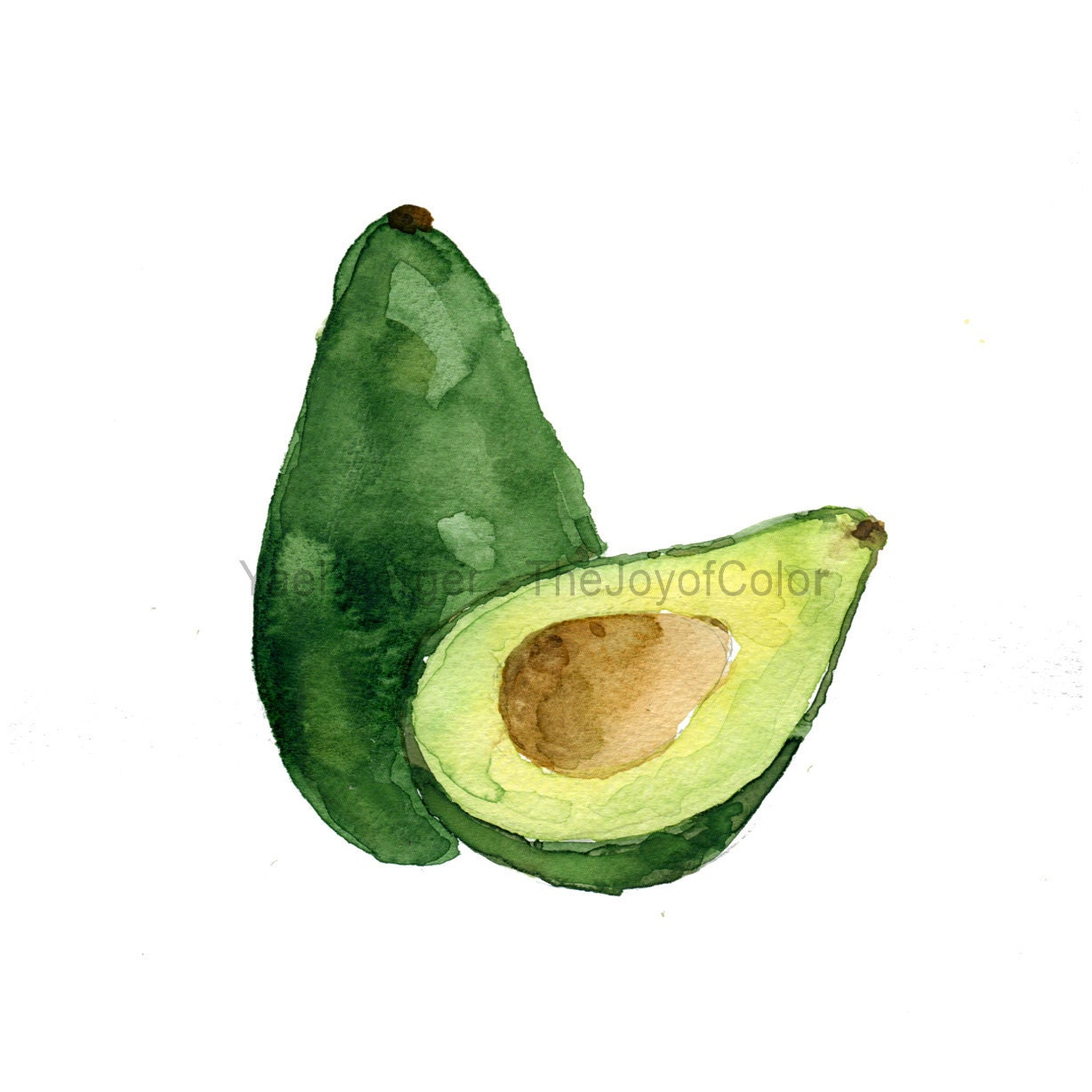Avocado study number three Avocado art print watercolor