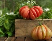 Zapotec Pleated Heirloom Tomato Seeds