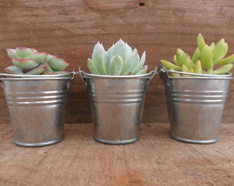 RESERVED For Kylie, 40 Succulent Favors With Silver Pails, Light Green Rosettes, Unique Wedding Favors, Ship August 17