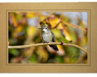 Hummingbird Cards - Green Hummingbird Photo Card - Autumn Colors Hummingbird Card