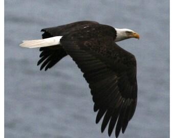"Eagle in Flight Fabric Panel 9-1/2"" x 9-1/2"""