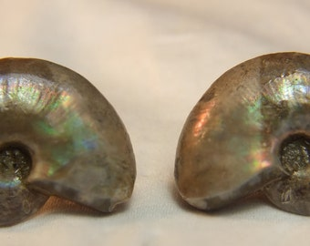 Exquisite Fossil Ammonite Earstuds; 925 silver; 4921