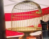 Bird Cage / Hendryx / Brass